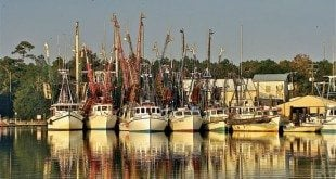 Cruising the ICW - The shrimping fleet in McClellanville, SC. Photo by Jody Reynolds