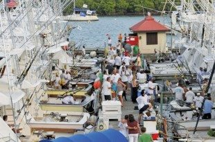 Docks at the IGY American Yacht Harbor Marina come alive with fishermen and spectators for the USVI Open/Atlantic Blue Marlin Tournament. Photo: Dean Barnes