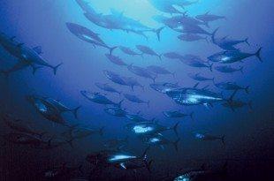 Photo courtesy of Ocean Conservancy