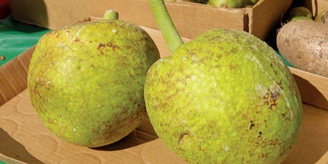 Breadfruit. Photography by Dean Barnes