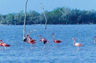 Bahamas - Flamingos in the pink! Photo: Lynn Gape