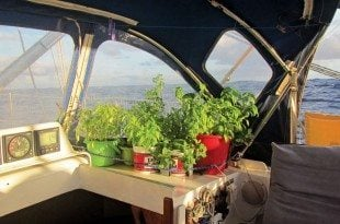 Safety harness for our Thai-basil, cilantro, oregano, spinach, mint and basil. Photo by Birgit Hackl