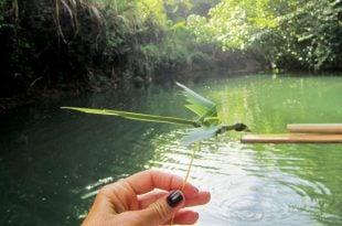 Indian River Tour Dominica: A gift from Martin. Photo by Monica Pisani