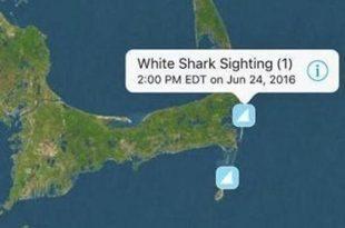 white shark tracker app