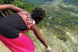 A young volunteer helps clean up Marigot Bay by during St. Lucia's Independence Day celebrations